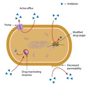 Mechanism of antibiotic resistance in bacteria, labeled diagram.